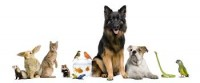 Carols Pet and Home Sitting Service
